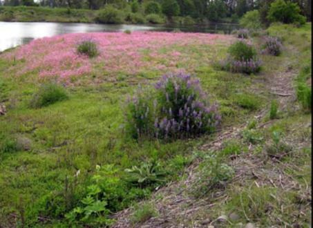 Delta Ponds native plants