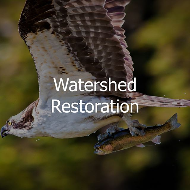 watershed restoration button link