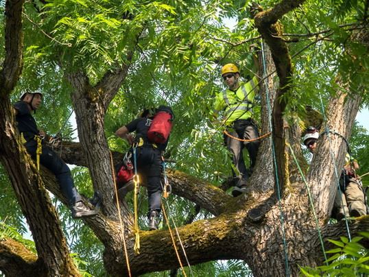 three staff members practicing aerial rescue in tree