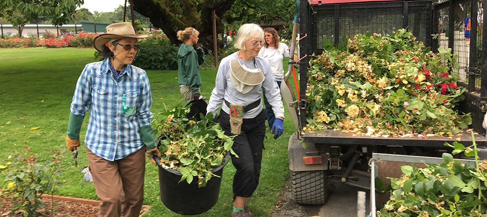 Volunteers at Owen Rose Garden