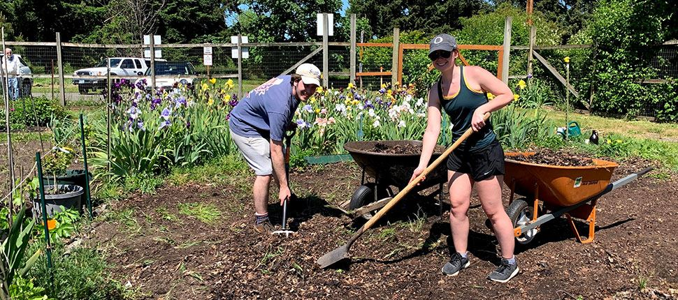 two people planting flowers in a community garden plot