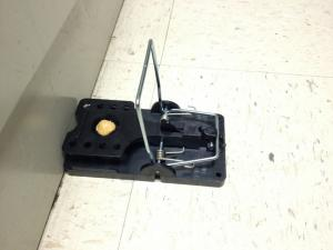 mousetrap against a wall