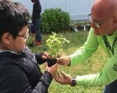 A school garden educator showing a student a plant start