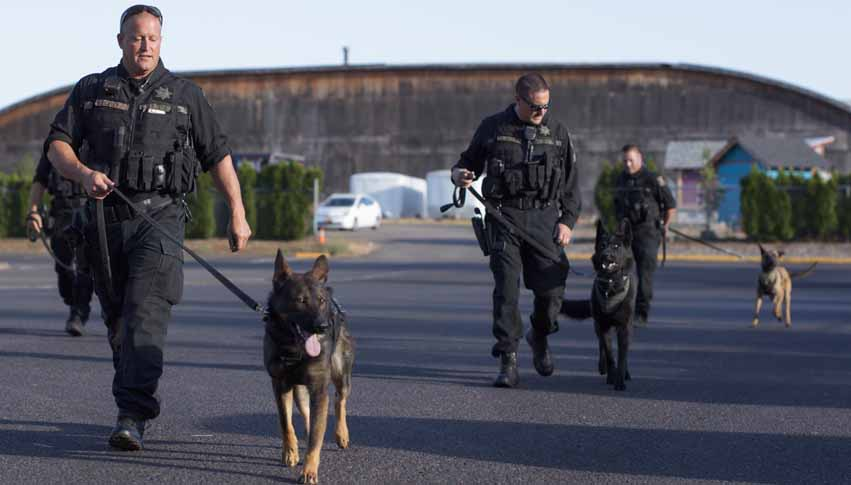 Several officers with their K-9s